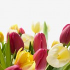 Pasqua A Cesenatico | 2night Eventi Forlì