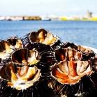 Dove mangiare pesce fresco a Gallipoli, ovvero i 10 modi per non sentire la mancanza del mare. | 2night Eventi Lecce