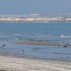 Le radici del Blues affondano nel delta | 2night Eventi Venezia