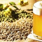 Degustibeer and Food: la fiera della birra artigianale | 2night Eventi Treviso