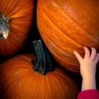 Festa di Halloween per bambini a Bitonto | 2night Eventi Bari