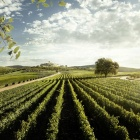 Altroché vinello da pasto. I 10 migliori vini italiani del 2018 | 2night Eventi