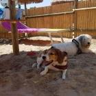 In vacanza con l'amico a 4 zampe? Ecco dove andare con i cani in spiaggia a Pescara | 2night Eventi Pescara