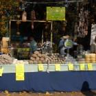 Le sagre e gli eventi più belli di novembre, nell'autunno di Verona e provincia | 2night Eventi Verona