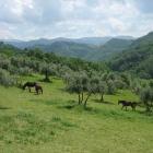 Santo Stefano 2018 a La Tenuta Resort Agricolo   2night Eventi Rieti