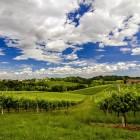 Primavera del Prosecco 2017: tutti gli appuntamenti frizzanti del trevigiano | 2night Eventi Treviso