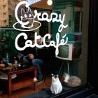 Il locale lo vorrei pet friendly. Ecco 7 posti diversi dal solito dove cani e gatti sono i benvenuti | 2night Eventi