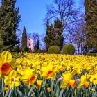 Feste, sagre eventi a Verona e provincia nel mese di Marzo | 2night Eventi Verona