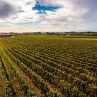 Pane e vino in campagna, dove rivivere i momenti genuini di una volta in provincia di Verona | 2night Eventi Verona