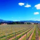 Il fascino della Valpolicella, colline con vista in provincia di Verona | 2night Eventi Verona