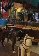 6 Locali... Da Cani! Ovvero, I Locali Dog-friendly Di Treviso E Provincia Dove Puoi Andare Anche Con Il Tuo Amico A 4 Zampe | 2night Eventi Treviso
