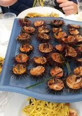 I Miei Locali Preferiti Dove Mangiare I Ricci Di Mare In Puglia | 2night Eventi Bari
