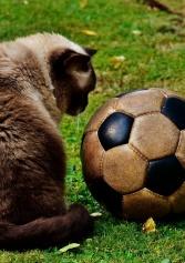 I Migliori Locali In Cui Vedere Le Partite Di Calcio Nella Provincia Di Barletta Andria E Trani | 2night Eventi Barletta