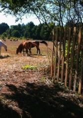 Un Weekend A Cavallo: Gli Agriturismi Del Lazio Con Maneggio | 2night Eventi Roma
