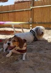 In Vacanza Con L'amico A 4 Zampe? Ecco Dove Andare Con I Cani In Spiaggia A Pescara   2night Eventi Pescara