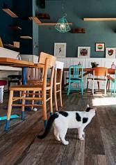 se Ancora Non L'hai Fatto, Ecco Perché Andare Ad Un Cat Cafè | 2night Eventi Milano