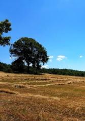 Un Weekend Nella Natura: I 6 Agriturismi Con Camere Del Lazio | 2night Eventi Roma