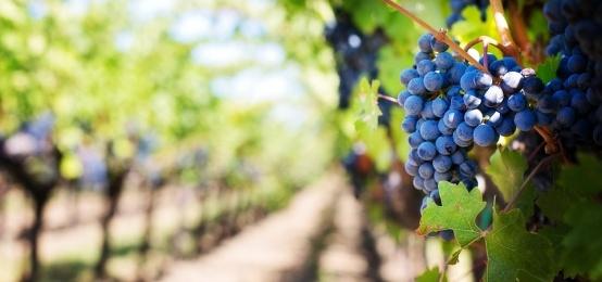 É Finalmente Pronto il Vino Novello! Degustazione a Montesilvano