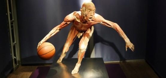 La mostra di cui tutti parlano: Real Bodies