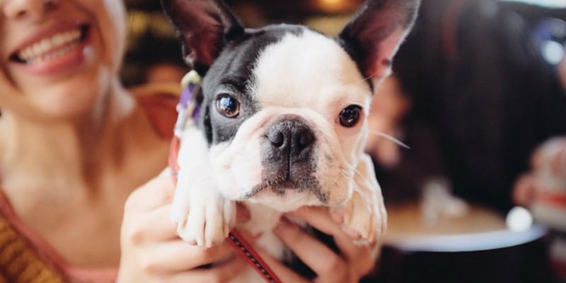 Io qui posso entrare: i migliori locali Pet-friendly del Veneto