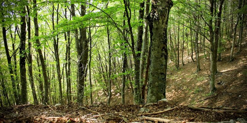foresta alberi natura