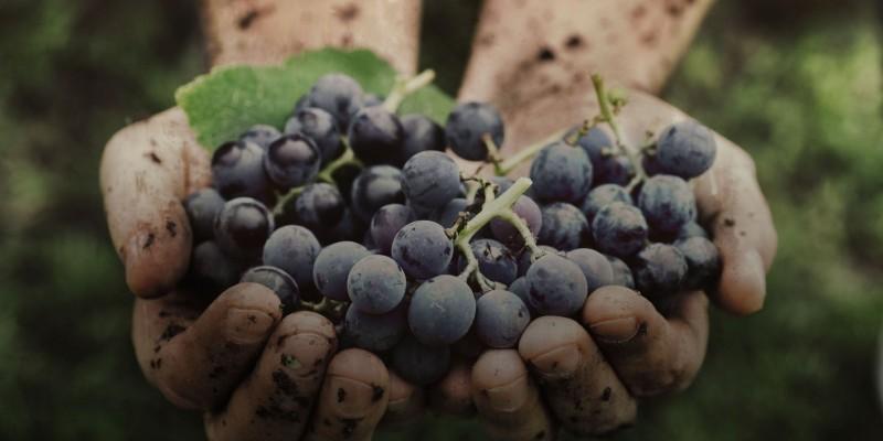5 vini naturali abruzzesi che devi provare almeno una volta nella vita!