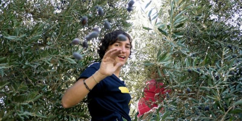 Girovagando tra le strade dell' olio e del vino in Puglia