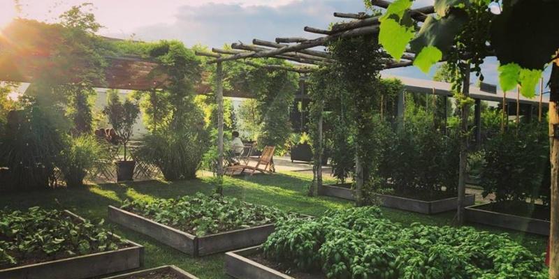 Ritorno alle origini: 4 locali della provincia di Treviso che utilizzano ingredienti a Km0 (e la salute ringrazia)