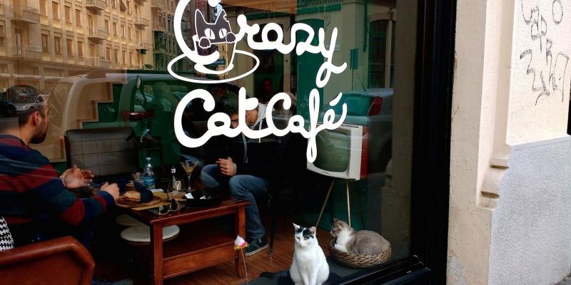 Il locale lo vorrei pet friendly. Ecco 7 posti diversi dal solito dove cani e gatti sono i benvenuti