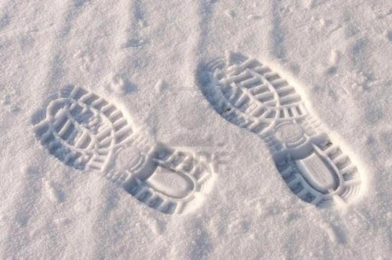 redattori licheri neve