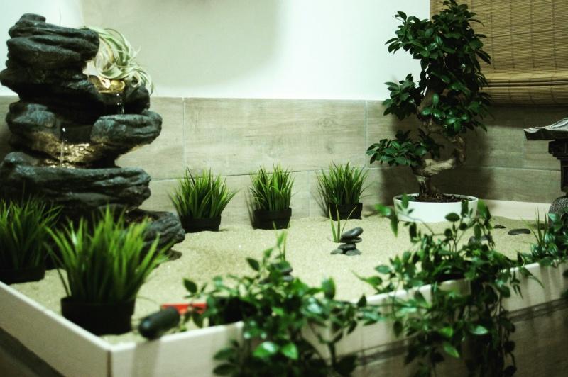 zen garden, wasabi zen garden