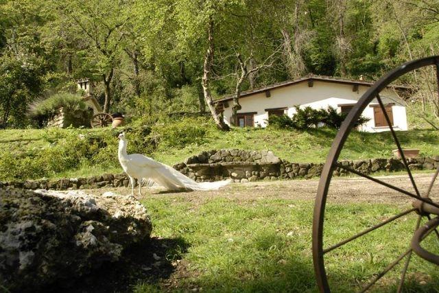 agriturismi con piscina vicino roma la cerra