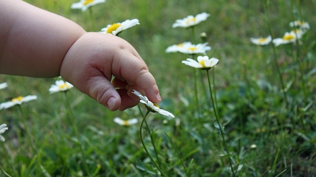 mano bambino fiore gentile