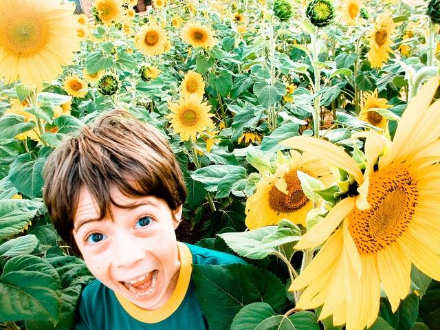 girasoli bambino sorride https://www.flickr.com/photos/jvc/4600994701/in/photolist-81ziqr-b7iyt-jwoens-pisf3z-qmywzn-acf1na-ndvykt-n9nt8j-3fm2bj-atpmgf-nbtnfk-5zca3u-n9nkuf-n9ncze-pqkubq-omqz2w-3fcpxa-o6u3dd-5wxsi2-q5wzpy-q5vabj-5cb1zu-7cyu3a-jwnfk1-j3gnpp-d9y9c-pqgpfv-unckg-5gk5ot-6natyj-jwnwka-4y6gqu-3v79zz-a2qsd-dbgie-ok25hf-7awlac-zm6bl-9u1ouc-x4lsv-p2eekc-pq5vbc-pj81jy-qjmfk7-pxpsfo-pxpnaj-ottdai-8qpt9c-7njxkn-7xhyft