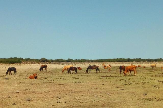 isola dei cavalli