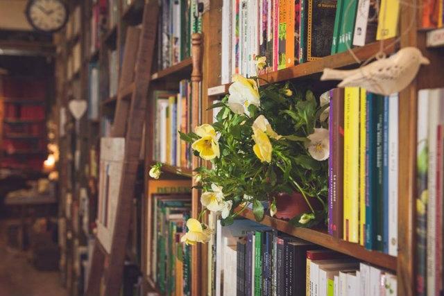 libreria il gelso verona