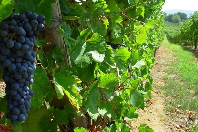 strada del vino dell'oltrepò pavese