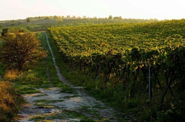 tenuta cefalicchio canosa di puglia strada dell'olio vino azienda agricola biodinamica ristorante