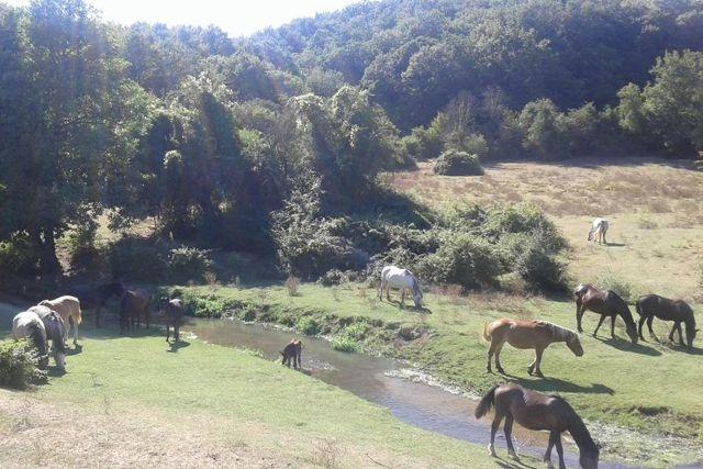 parchi naturali vicino roma parco di veio