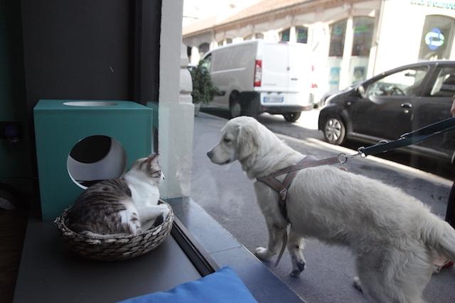 crazy cat cane e gatto