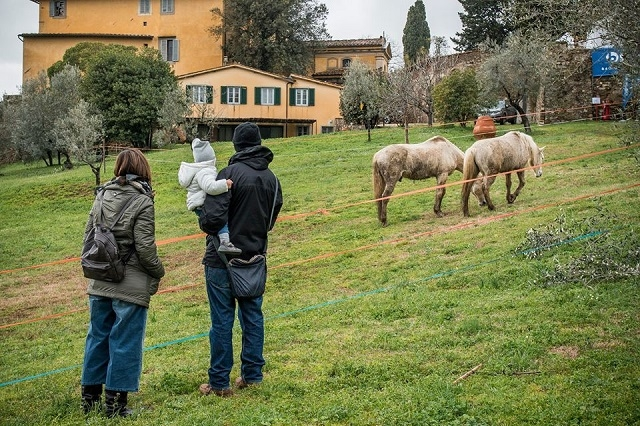 fattoria di maiano lo spaccio https://www.facebook.com/fattoria.dimaiano/photos/a.335321639945423.1073741830.322945327849721/1286296841514560/?type=3&theater