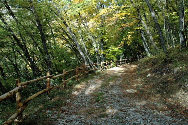 monte alpe sentiero