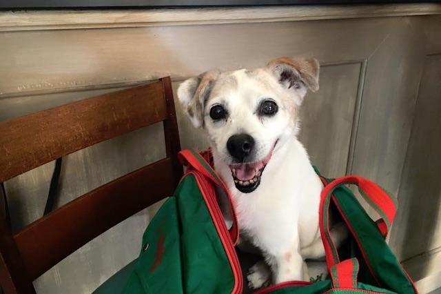 locali dog friendly firenze re matto https://www.facebook.com/275604369299816/photos/a.275614362632150.1073741827.275604369299816/524600527733531/?type=3&theater