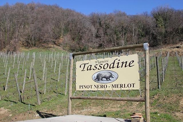 tassodine
