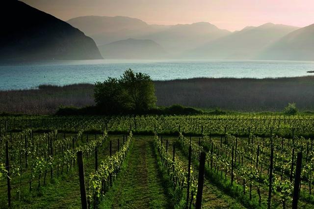 strade del vino franciacorta
