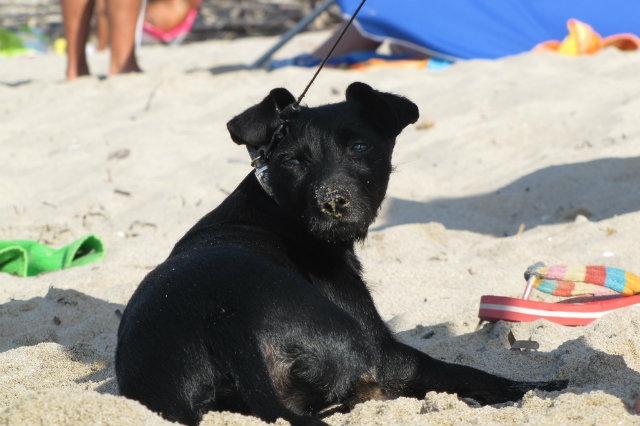 spiagge per cani pescara abruzzo